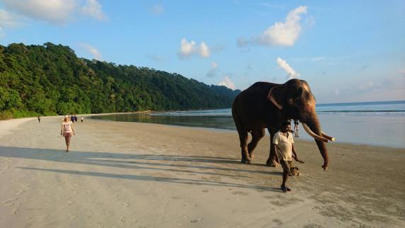 ele beach