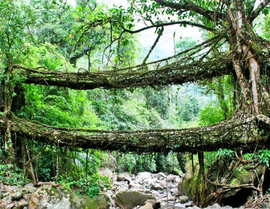 india-root-bridge