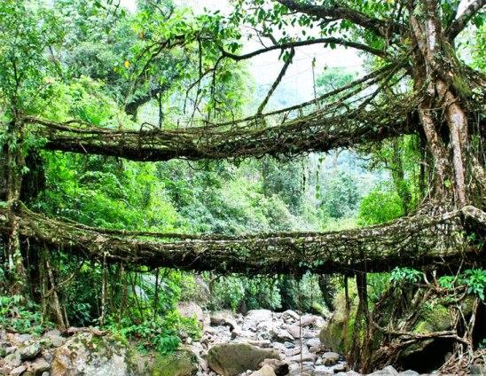 india-root-bridge