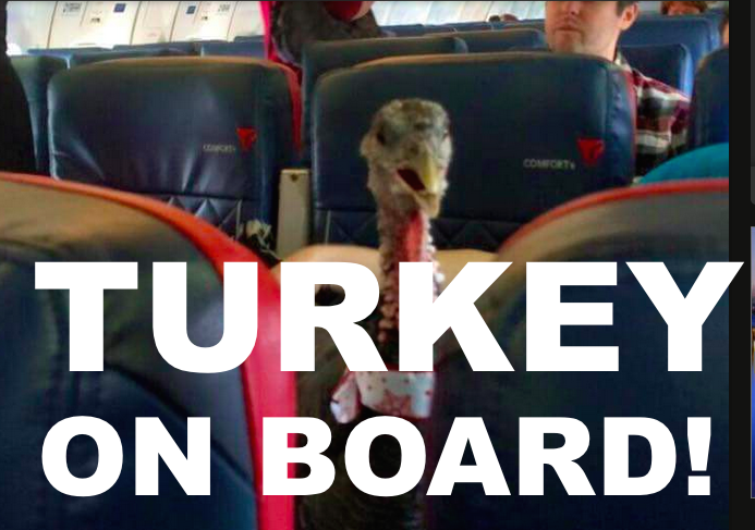 Turkey-On-Board
