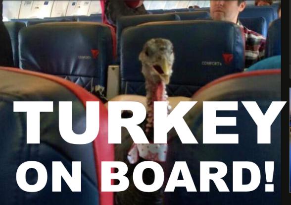 Turkey-On-Board